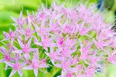 Makro von rosa Blumen Stockfotos