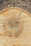 Makro von Sawed weg vom Holz lizenzfreie stockfotografie