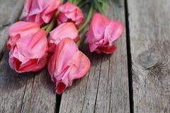 Makro von schönen rosa Tulpen lizenzfreie stockfotos