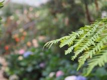 Makro von zarten Farnblättern stockfotos