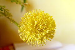 Makro- widok żółty kwiat Obraz Royalty Free