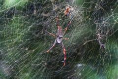 Makro- widok pająk Zdjęcie Royalty Free
