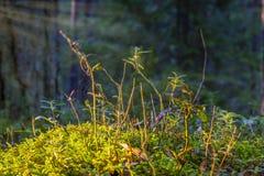 Makro- widok wierzchołek trawiasty pagórek obrazy royalty free