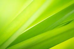 Makro- widok zieleń opuszcza teksturę pod światła słonecznego tłem zdjęcie royalty free