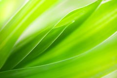 Makro- widok zielony li?? tekstury t?o fotografia royalty free