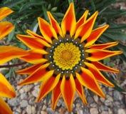 Makro- Wildflower Fotografia Royalty Free