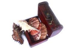 Makro- wizerunek denna skorupa w pudełku Zdjęcie Stock