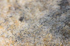 Makro- wizerunek foremka na chlebie Fotografia Royalty Free