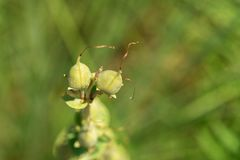 Makro- wizerunek pączek kwiat fotografia royalty free