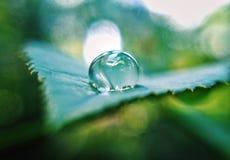 Makro- wodna kropla na różanym liściu obrazy royalty free
