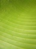 Makro- Wodne kropelki na bananowym liściu obraz royalty free