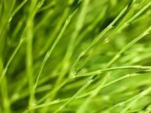 Makro- zielonej rośliny trzony zdjęcia stock