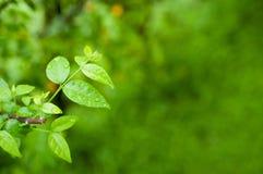 Makro- zielony liść zdjęcia royalty free