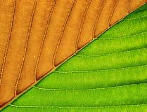 Makro- zielony liść. fotografia royalty free