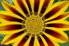 Makro zur wild wachsenden Pflanze Stockbild
