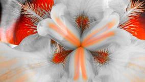 Makroansicht der Mitte einer Iris stockbilder