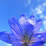Makroansicht der Mitte der violetten Blütenblume auf klarem Hintergrund des blauen Himmels Lizenzfreies Stockfoto
