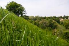 Makroansicht des grünen Grases mit blured Landschaft von grünen Hügeln oder von Bergen auf dem Hintergrund Lizenzfreie Stockbilder