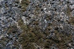 Makroansicht Stein-Backsteinmauer mit Moosbeschaffenheitshintergrund Lizenzfreie Stockfotos