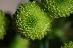 Makroansicht von grünen Blumen stockbilder