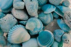 Makroansicht von Muscheln Eine Nahaufnahme einer Ansammlung Seashells Beschaffenheit von blauen Muscheln Stockbilder