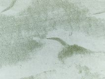 Makrobeschaffenheit - Anlagen - Kaktus Lizenzfreies Stockfoto