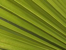 Makrobeschaffenheit - Anlagen - Palmenwedel Stockfoto