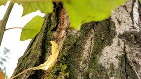 Makrobeschaffenheit des Baumstammes mit Moos stockfoto