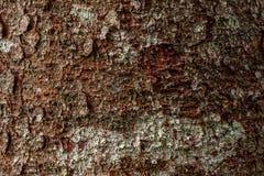 Makrobeschaffenheit des Kiefernbarken-Beschaffenheitshintergrundes lizenzfreies stockbild