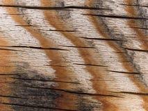 Makrobeschaffenheit - gestreifte hölzerne Oberfläche Lizenzfreie Stockbilder