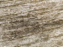 Makrobeschaffenheit - Holz - Korn Stockfotos
