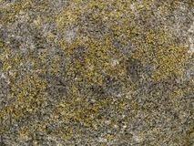 Makrobeschaffenheit - Stein - gesprenkelt Stockfotografie