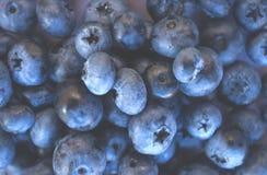 Makrobeschaffenheit von neuen und reifen bluberries lizenzfreie stockbilder