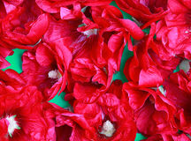 Makrobeschaffenheitshintergrund der roten Stockroseblume Stockbilder