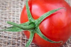 Makrobild av en enkel mogen tomat Arkivbild
