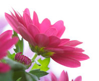 Makrobild av en röd blomma Royaltyfria Foton