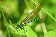 Makrobild der Libelle auf dem Urlaub Lizenzfreie Stockfotos