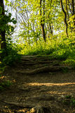 Makrobild des Bodens eines Waldes das trockene Buchenblatt im Vordergrund und in den Teilen einer Wurzel stockfotos