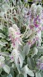 Makrobild des schönen violetten Blumenwachsens auf Wiese Nahaufnahmefoto von violetten Blüten stockfotos
