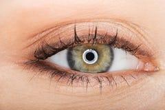 Makrobild des weiblichen Auges Stockfotografie