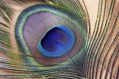 Makrobild einer Pfau-Feder Stockfotos