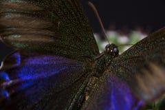 Makrobild eines Schmetterlinges in einem Garten Lizenzfreie Stockfotos