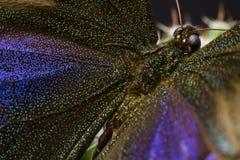 Makrobild eines Schmetterlinges in einem Garten Stockfoto