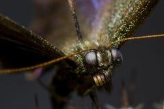 Makrobild eines Schmetterlinges in einem Garten Lizenzfreie Stockbilder