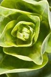 Makrobild einiger grüner Blätter Stockfotos