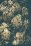 Makrobild med gr?n textur f?r tr?dsk?ll i gammal skog royaltyfria bilder