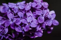 Makrobild von lila Blumen, abstrakter weicher Blumenhintergrund Lizenzfreies Stockbild