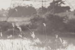 Makrobild von wilden Gräsern, kleine Schärfentiefe Weinlese-Effekt Wilde Gräser der schönen ländlichen Natur bei goldenem Sommers lizenzfreie stockfotos
