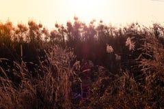Makrobild von wilden Gräsern, kleine Schärfentiefe Weinlese-Effekt Wilde Gräser der schönen ländlichen Natur bei goldenem Sommers lizenzfreies stockfoto
