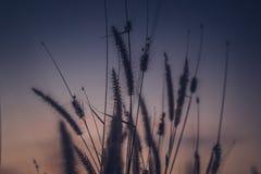 Makrobild von wilden Gräsern, kleine Schärfentiefe Weinlese-Effekt Wilde Gräser der schönen ländlichen Natur bei goldenem Sommers lizenzfreie stockfotografie